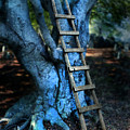 Young Woman Climbing A Tree by Jill Battaglia