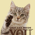 Your Cat Needs You by Warren Photographic