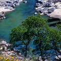 Yuba River In Spring by Lisa Redfern