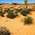 Yucca And Desert Primrose In The Valley Of Fire by Frank Wilson