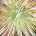 Yucca Burst by Ric Bascobert