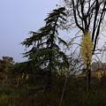 Yucca Filamentosa Rainy Day In Malibu by Viktor Savchenko