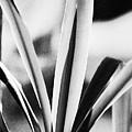 Yucca by Gerlinde Keating - Galleria GK Keating Associates Inc