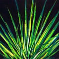 Yucca by Melvin Moon