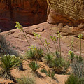 Yucca Plants Valley Of Fire by Frank Wilson