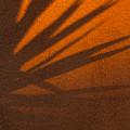 Yucca Shadow by Dennis Eckel