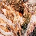 Yucca Warm Patch by Paul Tokarski
