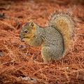 Yum Yum Nuts Wildlife Photography By Kaylyn Franks     by Kaylyn Franks