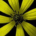 Yummy Yellow by Ed Smith