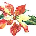 Yupo Poinsettia by Denise Ogier