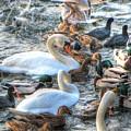 Yury Bashkin Ducks Stockholm  by Yury Bashkin