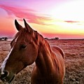 Zack During Sunset by JoJo Brown