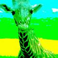 Zany Giraffe by Lisa S Baker