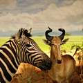 Zebra And Antelope by Marilyn Hunt