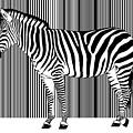 Zebra Barcode by Monika Juengling