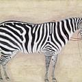 Zebra, C1620 by Granger
