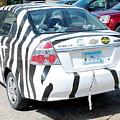 Zebra Car Rear by Wayne Williams