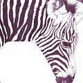 Zebra Colt by Debra Sandstrom