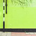 Zebra Crossing  by Tom Gowanlock