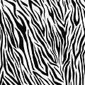 Zebra  by Eyal Bank