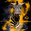 Zebra In Africa by Barbara Hebert