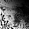Zebra Kill by Diane Parnell