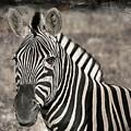 Zebra Lines by Charles McKelroy