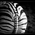Zebra by Lynda Art