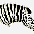Zebra by Michael Vigliotti