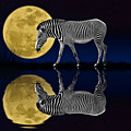 Zebra Moon by Nasser Osman