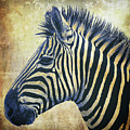 Zebra Portrait Popart by Angela Doelling AD DESIGN Photo and PhotoArt