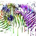 Zebra by Rosalia S
