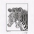 Zebra Series 6 by Pedro Brito Soares