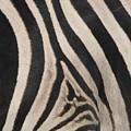 Zebra Stripes by Bruce J Robinson