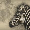Zebra Study by Peggy Kellogg