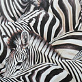 Zebra Triptyche Middle by Leigh Banks