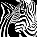 Zebra Works by Janet Fikar