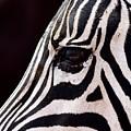 Zebras Eye by FL collection