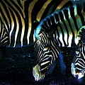 Zebras Glow by Kenna Westerman