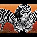 Zebras In Sunset Field by Dana Bennett