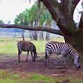 Zebras Under Oaks by Alice Gipson