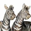 Zebras Watercolor by Zapista Zapista