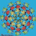Zeerkl Of Angelfish by Edelberto Cabrera