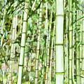 Zen Bamboo Forest by Jeelan Clark