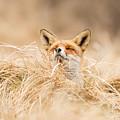 Zen Fox Series - Zen Fox 2.7 by Roeselien Raimond