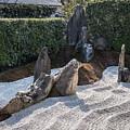 Zen Garden, Kyoto Japan 2 by Perry Rodriguez