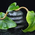 Zen... by Manfred Lutzius