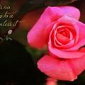 Zen Proverb 2 by Clare Bevan