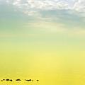 Zen Seascape by Silvia Ganora