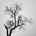 Zen Tree by Guido Montanes Castillo